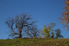 Landschap in ochtendlicht Royalty-vrije Stock Fotografie