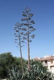 Landschap op Cyprus Stock Fotografie