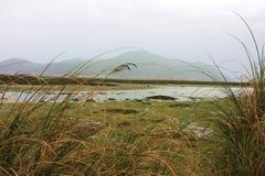 Landschap op de bank van een moeras Royalty-vrije Stock Foto's