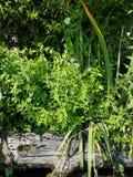 Landschap op de bank van een vijver, Blauwe bloemen in een netel over een logboek royalty-vrije stock fotografie