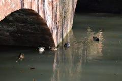Landschap: oude steenbrug royalty-vrije stock afbeelding