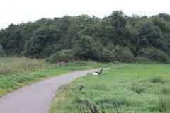 Landschap overvieuw met weg Stock Fotografie