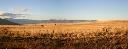 Landschap in Patagonië Stock Fotografie