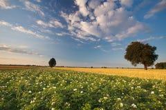 Landschap in Polen Stock Foto