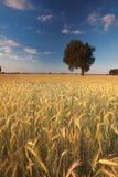 Landschap in Polen Stock Afbeelding