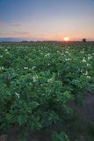 Landschap in Polen Royalty-vrije Stock Foto