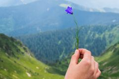 Landschap, reis, toerisme Een vrouwelijke hand houdt een bloem tegen de achtergrond van de bergen Horizontaal kader Royalty-vrije Stock Foto's