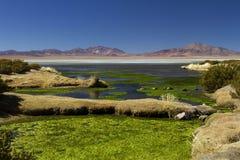 Landschap in Salar de Taras Royalty-vrije Stock Afbeelding