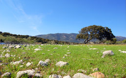 Landschap Sardinige stock afbeelding