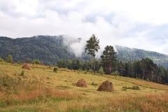 Landschap-Siberische taiga, bergen en mist royalty-vrije stock foto