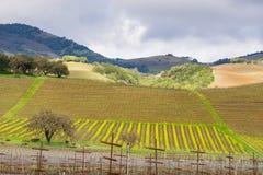 Landschap in Sonoma-Vallei aan het begin van de lente, Californië royalty-vrije stock afbeelding