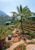Landschap in Sri Lanka Royalty-vrije Stock Foto