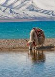Landschap in Tibet Royalty-vrije Stock Afbeelding