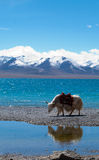 Landschap in Tibet Royalty-vrije Stock Foto's