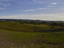 Landschap, Toscanië Val D'Orcia Stock Foto