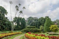 Landschap in Tuin van Peradeniya Stock Foto