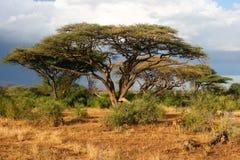 Landschap vóór onweer, Samburu, Kenia Stock Afbeeldingen