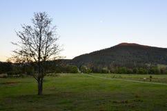 Landschap van Australisch landbouwbedrijf i Royalty-vrije Stock Afbeelding