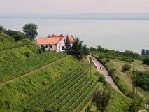 Landschap van Badacsopny Royalty-vrije Stock Foto