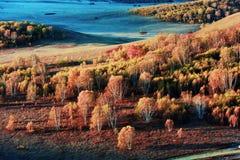 Landschap van Bashang-Weiden stock afbeeldingen