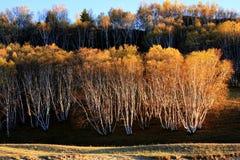 Landschap van Bashang-Weiden royalty-vrije stock afbeelding