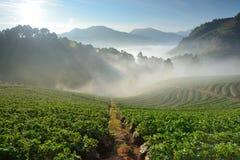 Landschap van berg en aardbeilandbouwbedrijf royalty-vrije stock afbeelding