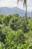 Landschap van bergen, door vochtige bossen wordt omringd dat royalty-vrije stock fotografie