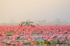 Landschap van beroemde rode lotusbloemoverzees in Thailand Royalty-vrije Stock Fotografie