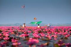 Landschap van beroemde rode lotusbloemoverzees in Thailand Royalty-vrije Stock Foto's
