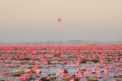Landschap van beroemde rode lotusbloemoverzees in Thailand Royalty-vrije Stock Afbeeldingen