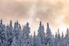 Landschap van bevroren bomen en de zon onder de wolken Royalty-vrije Stock Foto