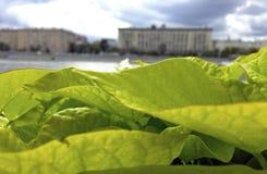 Landschap van bladeren op de rivier royalty-vrije stock foto's