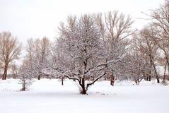 Landschap van bomen royalty-vrije stock afbeelding