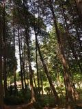 Landschap van bomen Stock Foto's