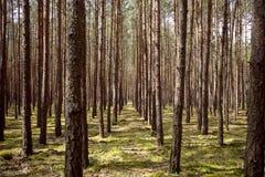 Landschap van bomen en installaties in bos tijdens de zomer stock afbeelding