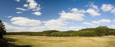 Landschap van bomen en weide stock afbeelding