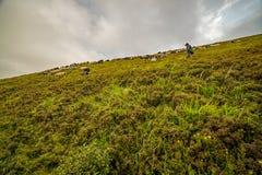 Landschap van Borzhava-rand van de Oekraïense Karpatische Bergen Wolken boven de Karpaten stock fotografie