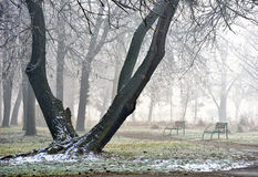 Landschap van bos in mist Stock Foto's
