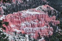 Landschap van Bryce Canyon And Pine Trees in Roze Toon Royalty-vrije Stock Foto's