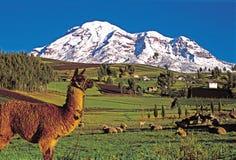 Landschap van Chimborazo royalty-vrije stock afbeelding