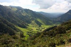 Landschap van Cocora vallei, Colombia Stock Afbeelding