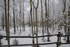 Landschap van de affiche het perfecte Winter van countryside'shout stock afbeelding