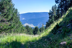 Landschap van de bergen die van de Pyreneeën uit het in de schaduw gestelde bos komen Stock Afbeeldingen