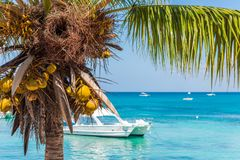 Landschap van de Caraïbische Zee, Bayahibe, La Altagracia, Dominicaanse Republiek Exemplaarruimte voor tekst Royalty-vrije Stock Foto's