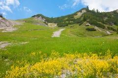 Landschap van de Dolomietbergen met gele bloemen in Stock Fotografie