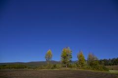 Landschap van de herfst in Japan Stock Afbeeldingen
