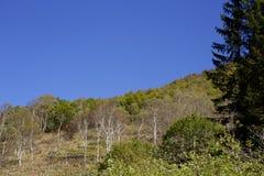 Landschap van de herfst in Japan Royalty-vrije Stock Foto