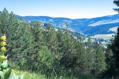 Landschap van de het bos en bergen van de Pyreneeën Stock Foto