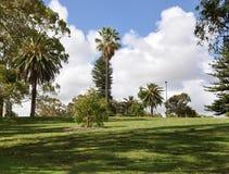 Landschap van de het Park het Tropische Tuin van de koning Stock Afbeeldingen
