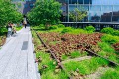 Landschap van de Hoge Lijn Stedelijk openbaar park op een historische lijn van het vrachtspoor, de Stad van New York, Manhattan Stock Foto's